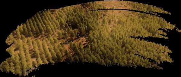 roccia_brush_topografia